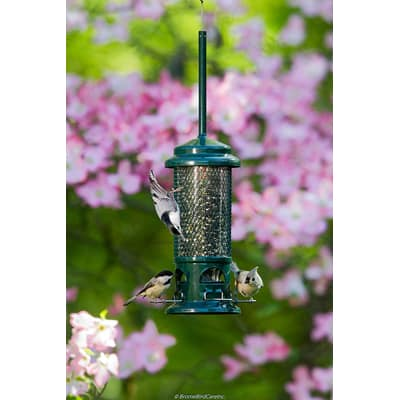 2. Brome Squirrel Buster Standard Squirrel-proof Bird Feeder with 4 Metal Perches